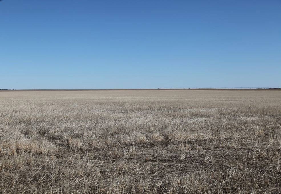 IMG_7263-(2)-Millet-stubble-looking-south.jpg