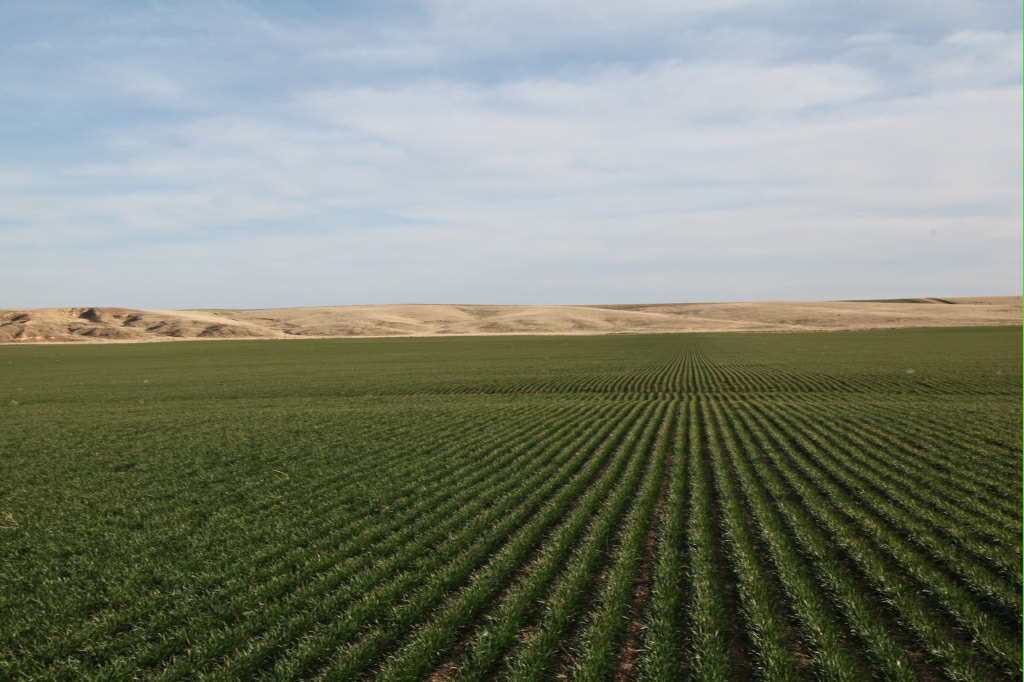 dryland in colorado for sale, reck agri