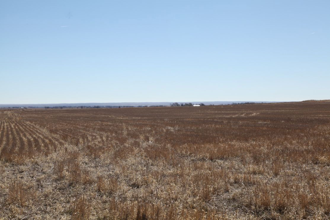 Parcel #1A stubble, colorado land auction, crp in colorado