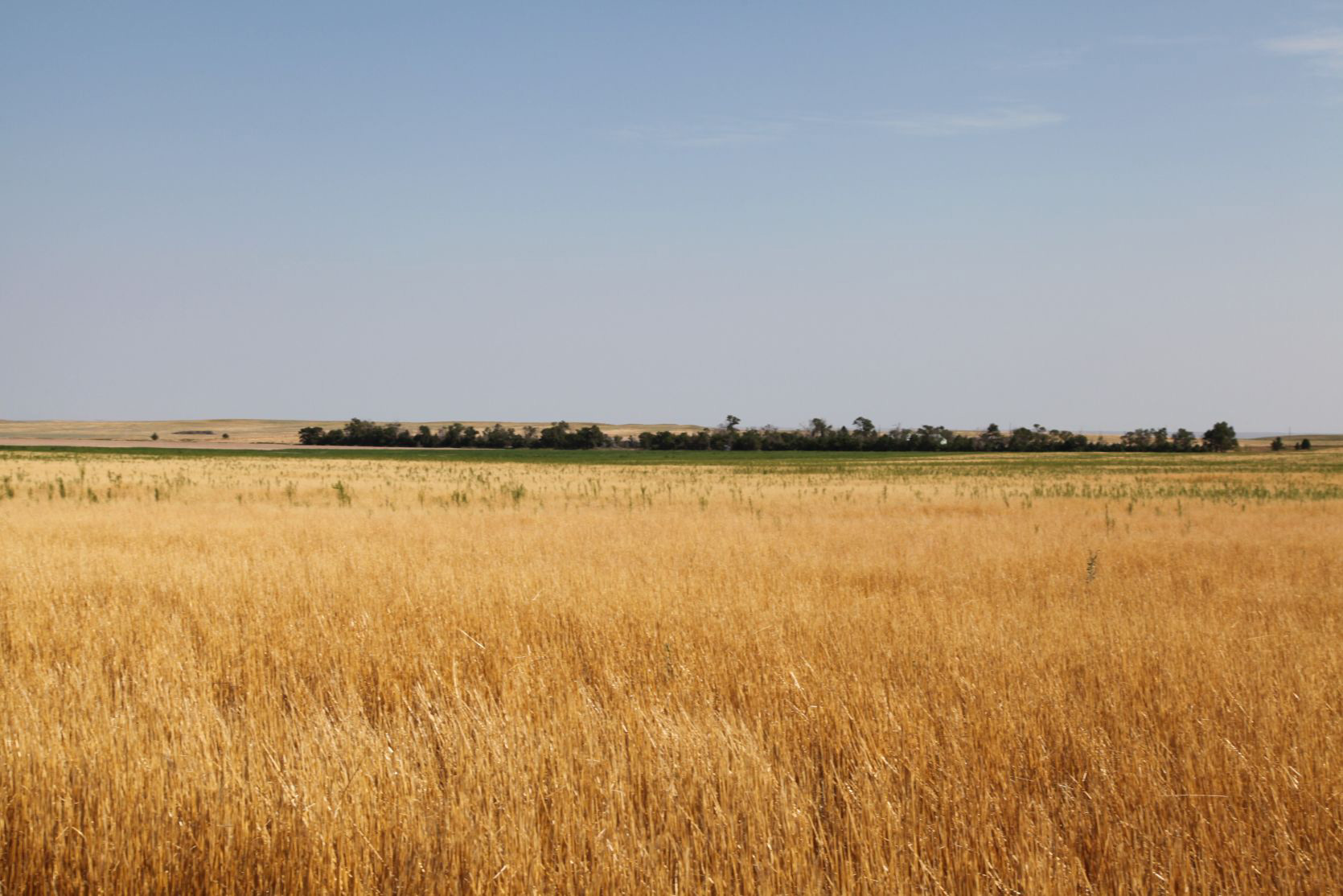 Parcel-2A---wheat-stubble.jpg