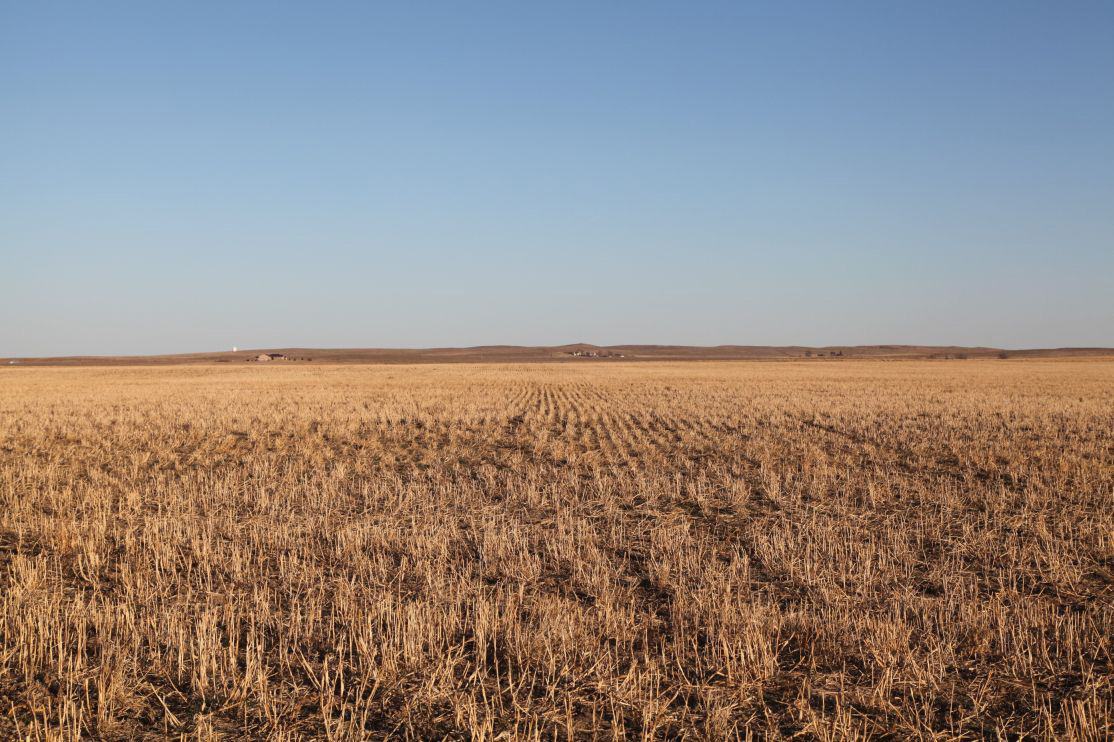 Parcel-3---millet-stubble-with-growing-wheat.jpg