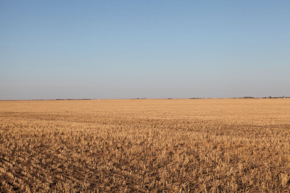 Parcel-3-millet-stubble-with-growing-wheat.jpg