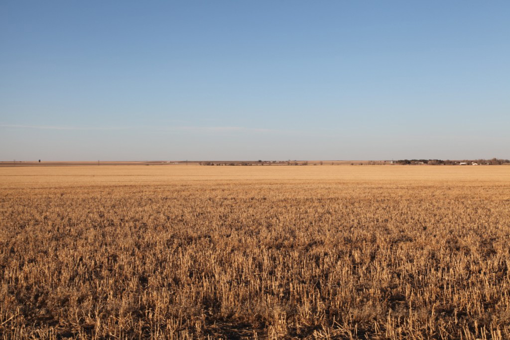 Parcel-5-millet-stubble-with-view-to-N.jpg