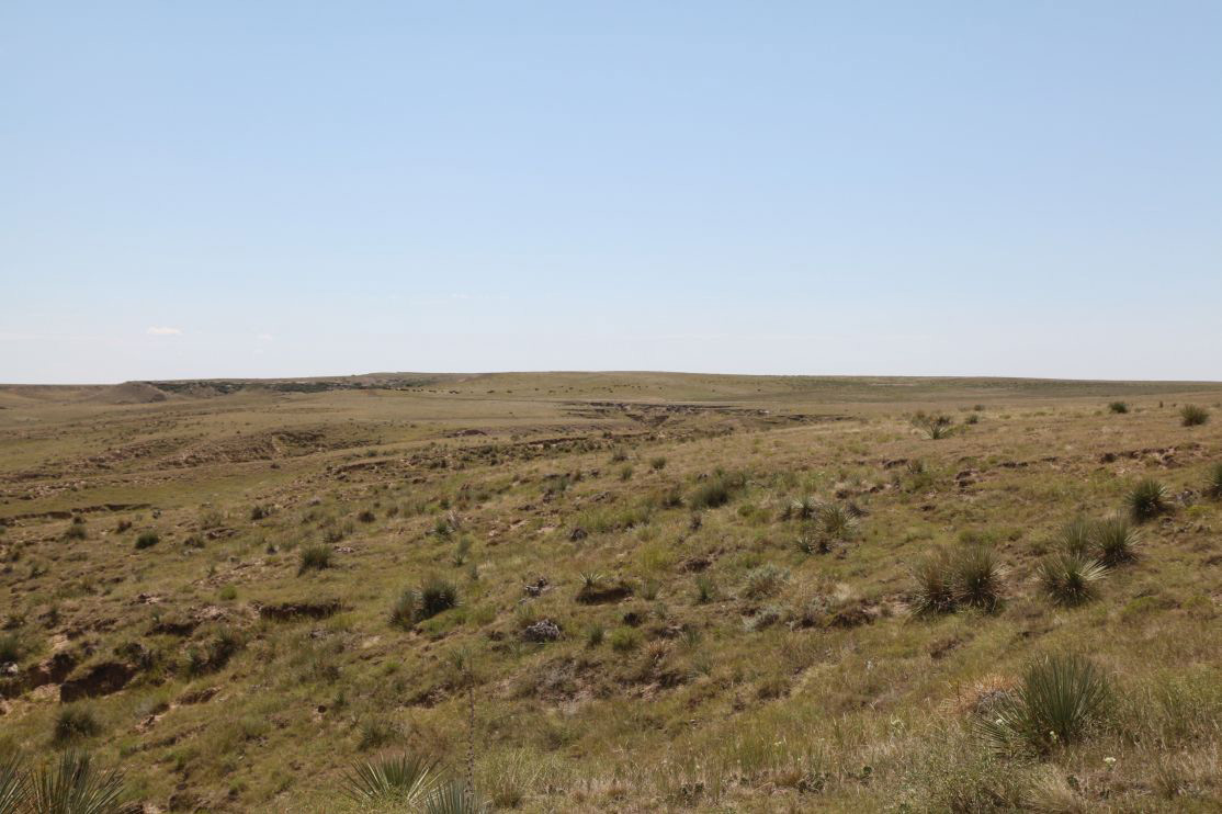 Pasture-on-west-side-of-2B.jpg