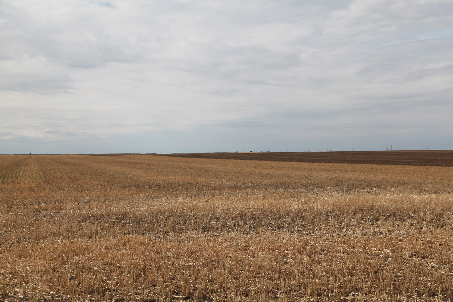 View of Parcel 1 millet stubble