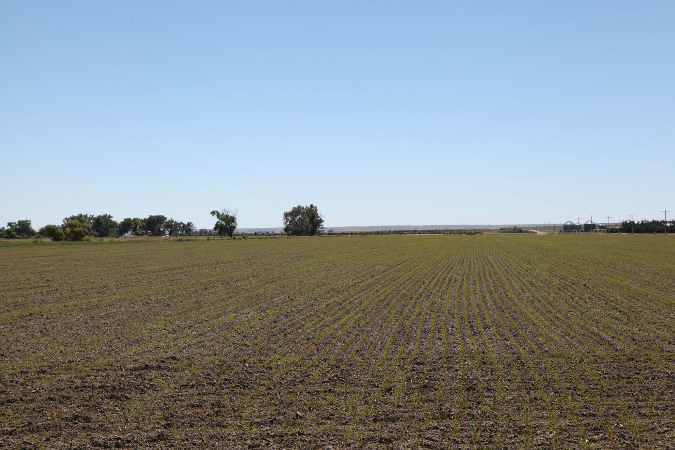 Wheat-planted-on-flood-irrigated.jpg