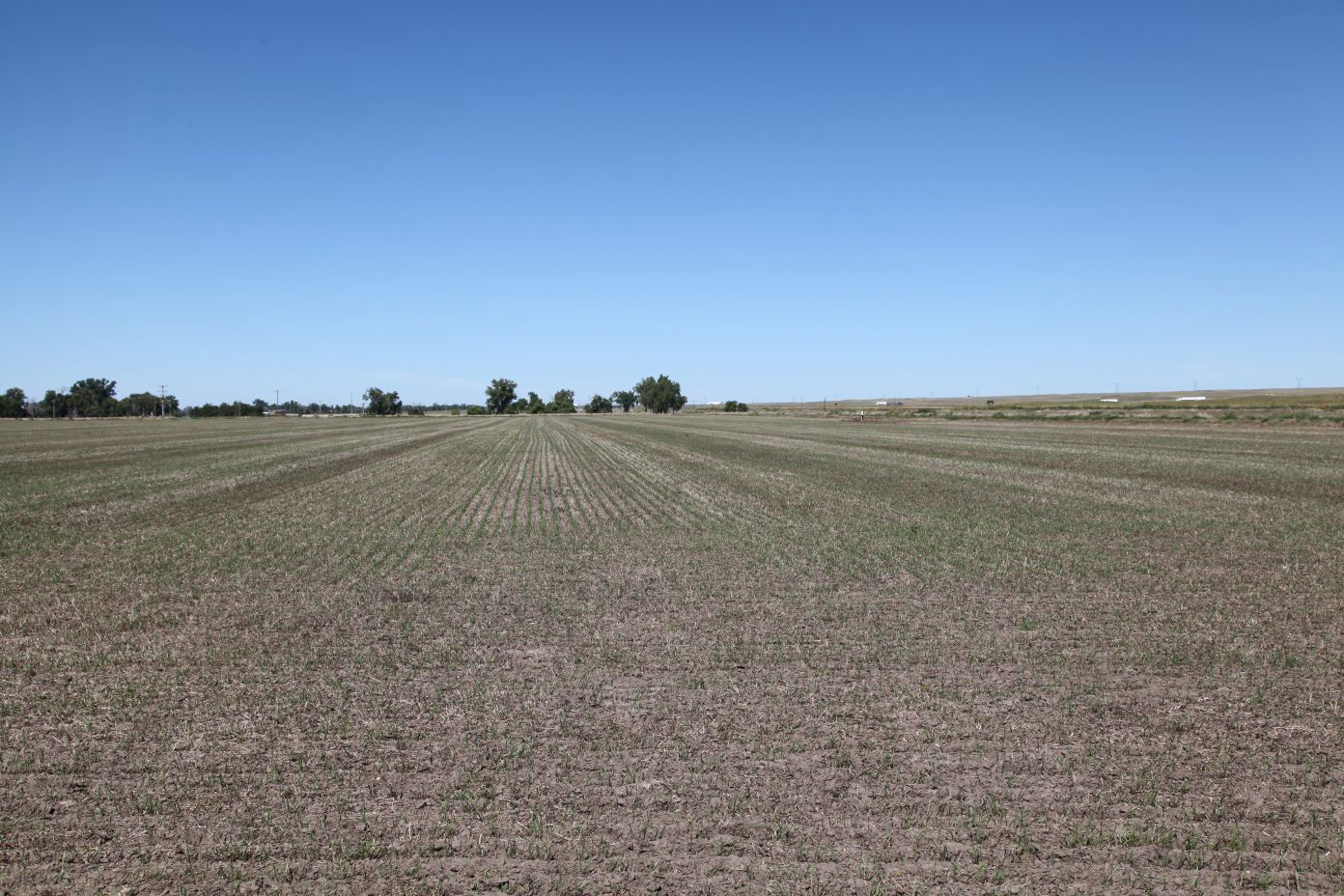 Wheat-planted-on-pivot-on-east-parcel.jpg