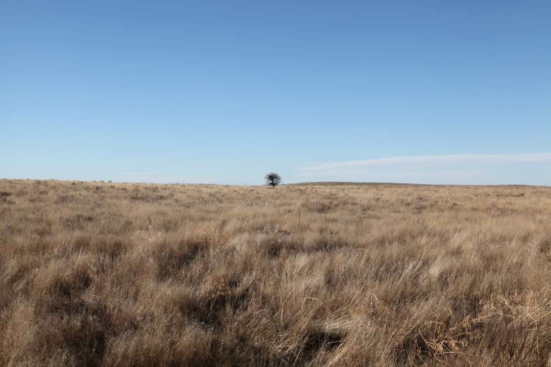 lone-tree-in-west-pasture.jpg