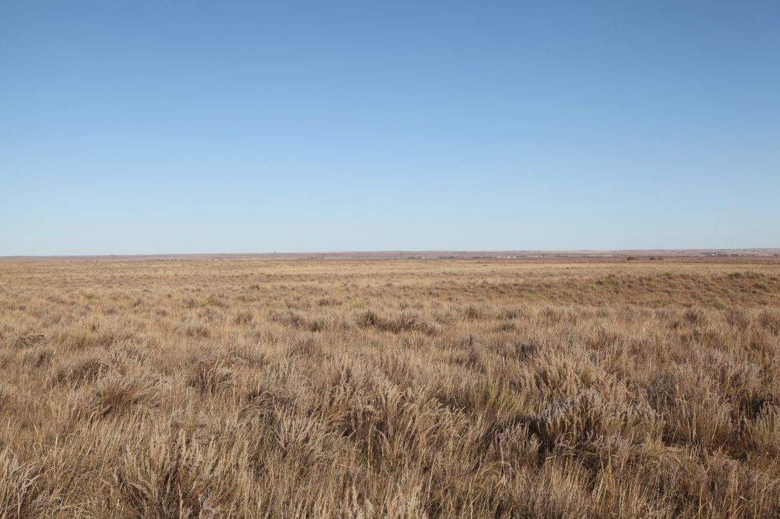 west-pasture-looking-NE.jpg