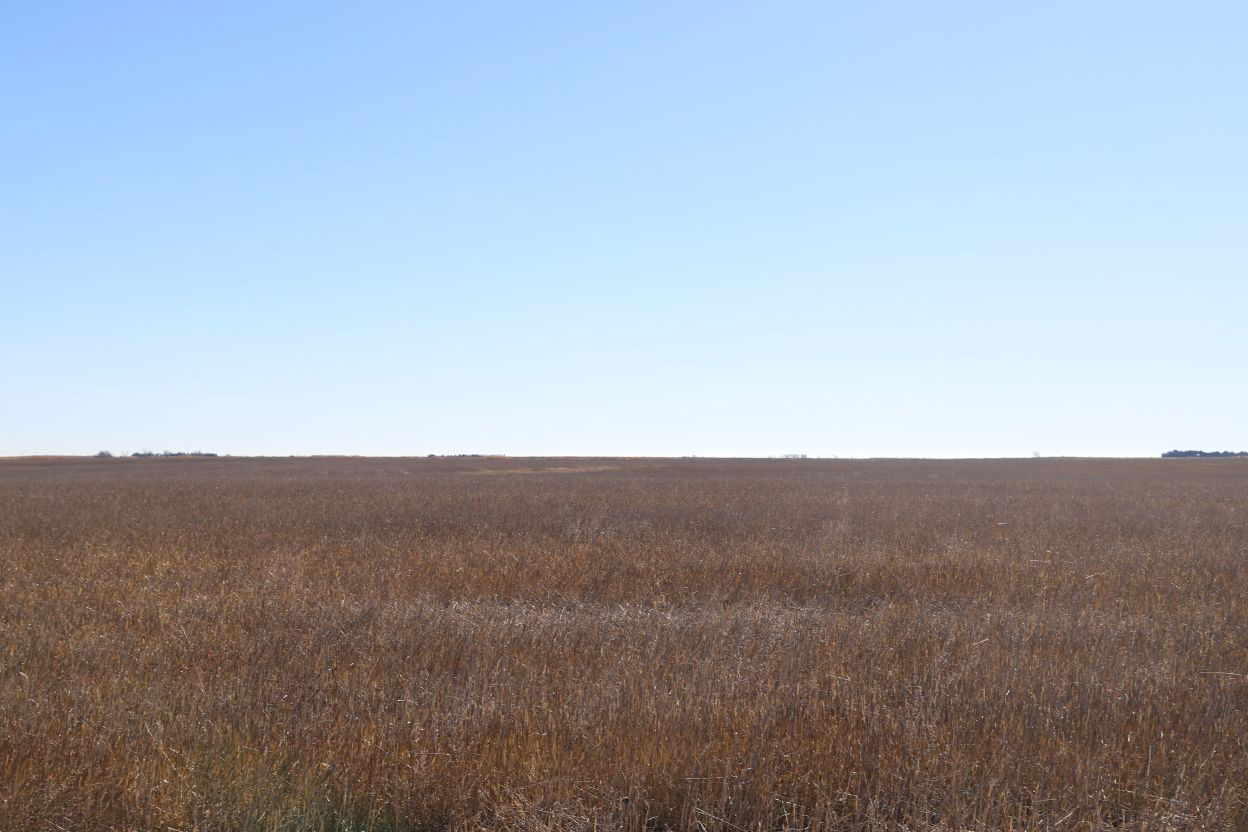 wheat-stubble-to-be-planted-to-dryland-corn.jpg